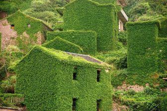 casas verdes de Pinterest